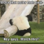 funny-pictures-panda-